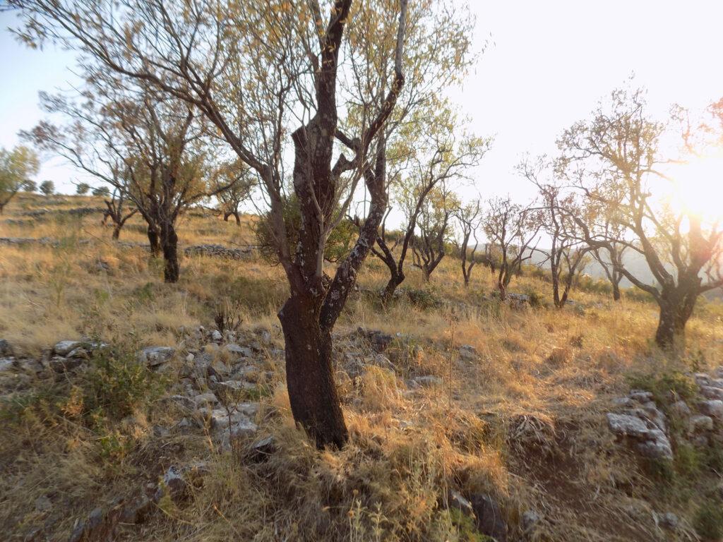 PLOT OF LAND IN KASSIOPI (10)