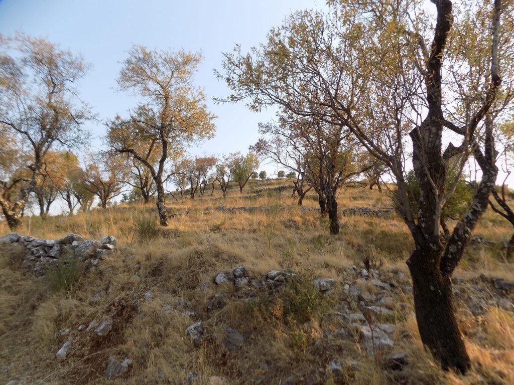 PLOT OF LAND IN KASSIOPI (9)