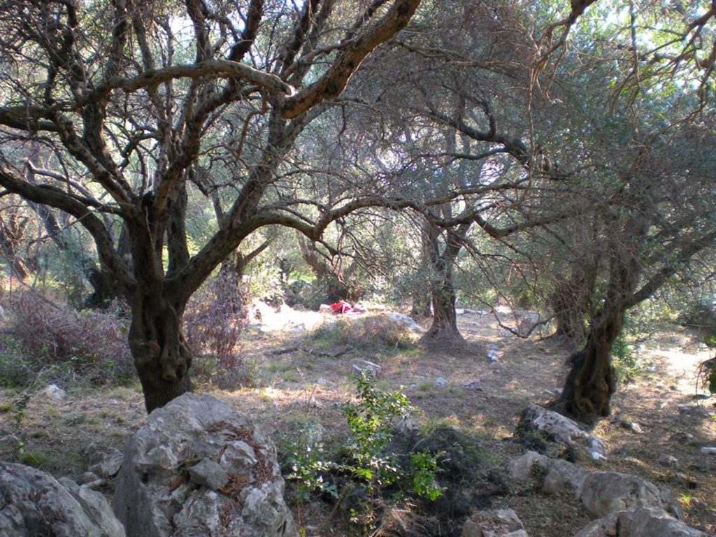 PLOT OF LAND FOR SALE IN KASSIOPI (6)