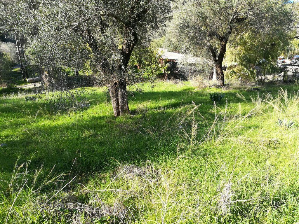 PLOT OF LAND FOR SALE IN AGIOS SPIRIDON
