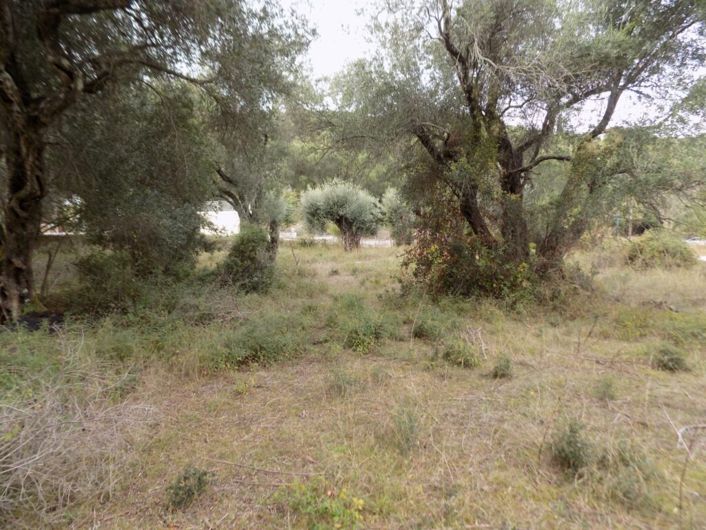 PLOT OF LAND FOR SALE IN KASSIOPI