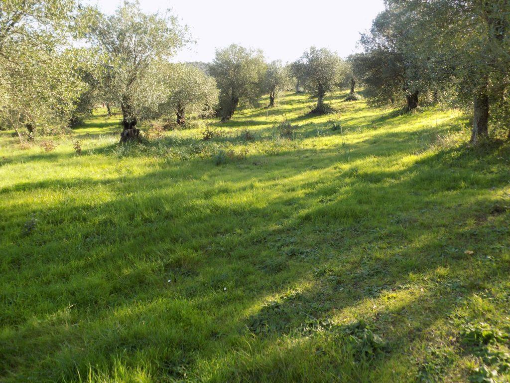 PLOT OF LAND FOR SALE IN AVLAKI